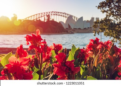 Bright red canna lily flowers with Sydney landmarks on the background. Sydney, Australia tourism background