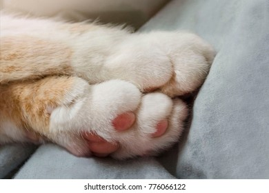Bright red cat paws. Sleeping on grey background