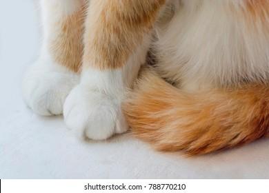 真っ赤な猫の手としっぽ。白い背景に座る
