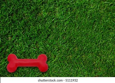 Bright red dog bone on green grass