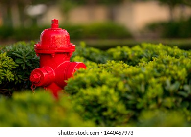 Bright red firehydrant in green bushes