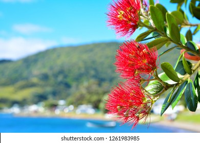 Bright red flowers of Pohutukawa tree blossom against tranquil sea on a fine summer day. Mountains in the background. Iconic New Zealand