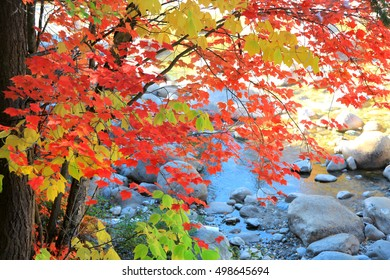 Bright red Maple leaves in the forest