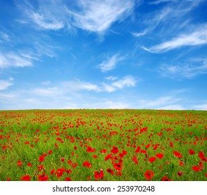 Bright red poppies on sun