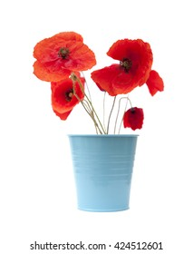 bright red poppy isolated on wjite background