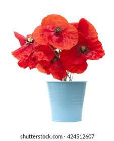 bright red poppy isolated on white background