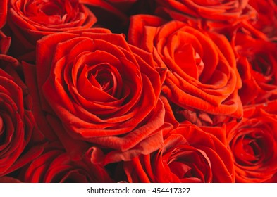 Bright red roses near