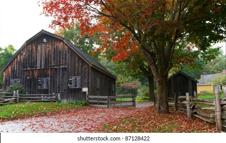 Bright red sugar maple leaves are strewn on the country lane leading to an old weathered wood barn and rail fence. Horizontal format.
