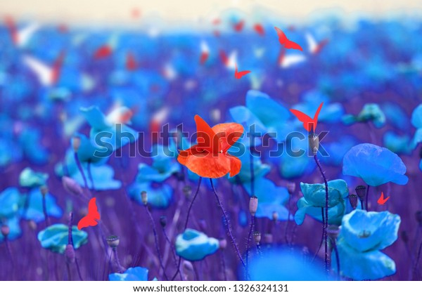 Bright retro photo of nature field with unusual blue poppies and butterflies in summer