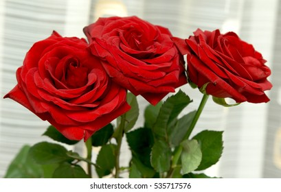 bright rose flower