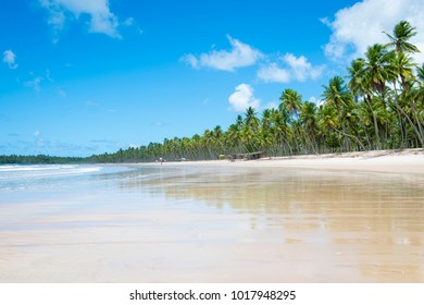 Bright scenic mid-day view of a broad empty beach lined with palm trees on the shore of a remote island in Bahia, Brazil
