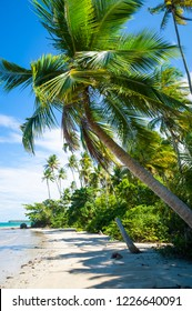 Bright scenic view of rustic tropical island beach with palm trees casting shadows under blue sky in Bahia, Brazil