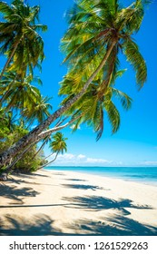 Bright scenic view of tall curving palm trees casting shadows on the shore of a deserted tropical island beach in Bahia, Brazil