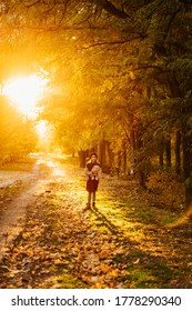 in the bright setting sunlight, the girl with the hat and the plaything is on the road in autumn Park.