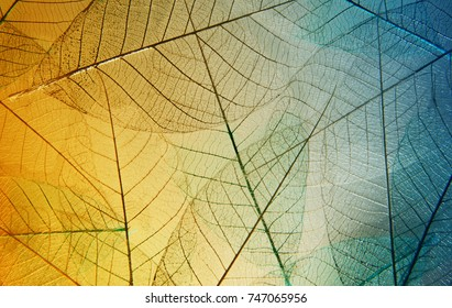 Bright skeleton leaves yellow and blue color background. Beautiful artistic macro photo