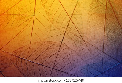 Bright skeleton leaves yellow, purple and blue color background. Beautiful artistic macro photo
