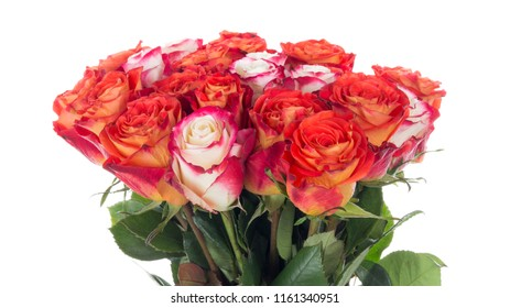 bright spectacular bouquet of fresh beautiful red and white roses with a pink border on petals and green leaves on a white isolated background