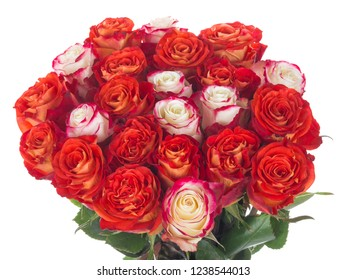 bright spectacular bouquet of fresh beautiful red and white roses with a pink border on petals on a white isolated background