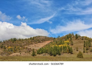 Bright spots of trees and vegetation on the mountain side in autumn