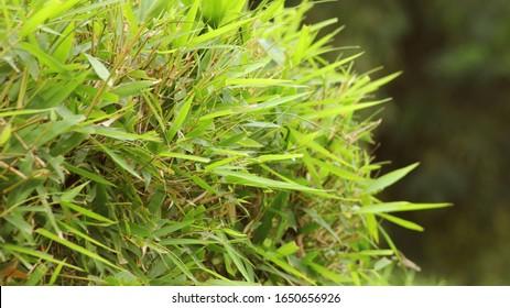 Bright spring grass field background