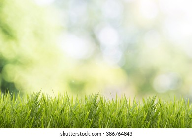 Bright spring grass field with sunlight bokeh background