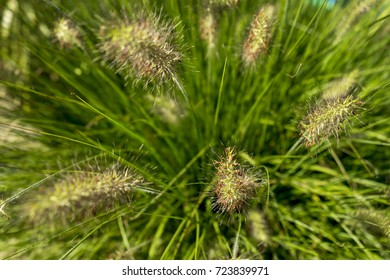Bright spring grass field with sunlight bokeh background; selective focus