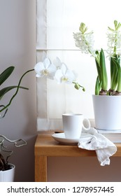 Bright still life composition on a window sill with white flowers and a coffee cup