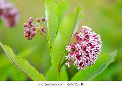 Bright summer in the colors of flowers on the clearing in the form of a ball of inflorescences