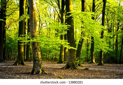 bright summer forest with brown leaves on the forest floor