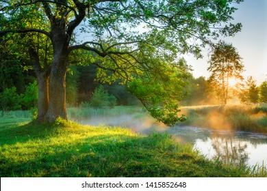 Bright summer morning by the riverside. Big green tree on the river bank. Fog by the river. Sunny morning. Summer landscape.
