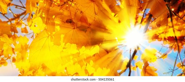 Bright sun in autumn leaves