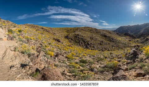 Bright Sun Burst Above Desert Bloom of Yellow Flowers