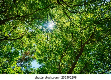 Bright sun burst through a green leafy tree canopy overhead, seen at Carnarvon Gorge, Queensland, Australia, unfocused