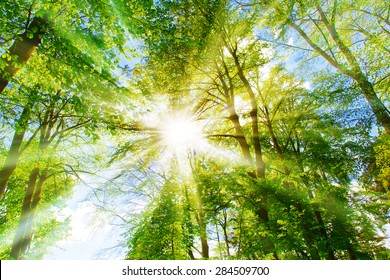 Bright sun in the forest