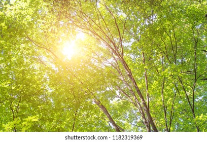 Bright sun in the forest background abstract