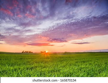 Bright sun and green grass field.
