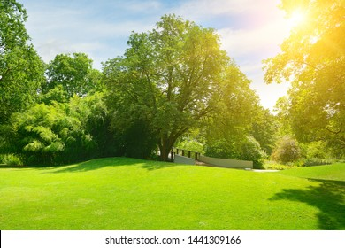 Bright sun in green summer city park.