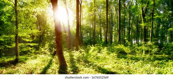 Bright sun illuminates a clearing in the forest