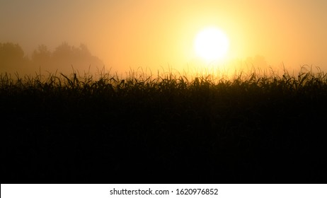 Bright sun over cornfield. Free space for text. First sunny rays. Field at Dawn cloudy orange sky background. Misty morning in a cornfield. Silhouette of corn during dawning. Misty colorful landscape.