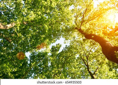 The bright sun rays shining through branches of trees, wood landscape
