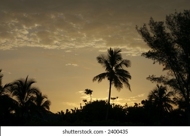 the bright sun rises behind trees on the beach
