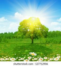 Bright sun shining through foliage of tree.