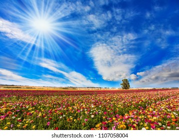 Bright sun warms wonderful flowers. Concept of active and ecological tourism. The picturesque field of flowering colorful buttercups