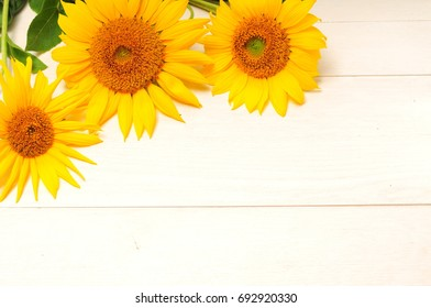 Bright sunflowers on a white background