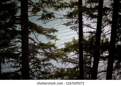 Bright sunlight reflect through branches of a green spruce tree forest on a beautiful mountain lake in Switzerland. The still water has small ripples with bright reflections. Matte vintage pastel look