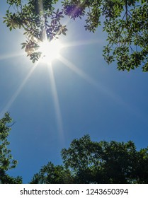 Bright sunlight with sunbeams in clear blue sky with summer treetops framing the sun