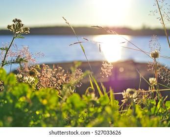 Bright sunlit seaside vegetation in bright sunlight. Summer background.
