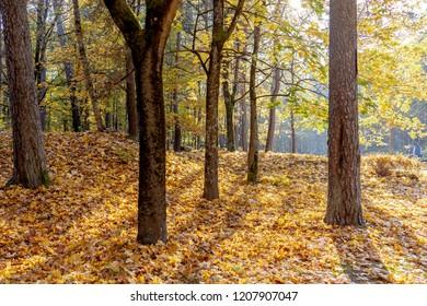 bright sunny autumn in the mountains. Colourfull landscape. Sigulda, Latvia. Baltic states.