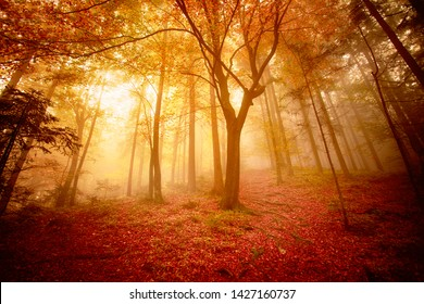 Bright sunny colorful autumn season forest with trees.