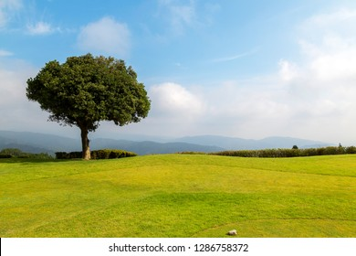 A bright sunny day with blue cloudy sky and green tree and grass field. - Shutterstock ID 1286758372